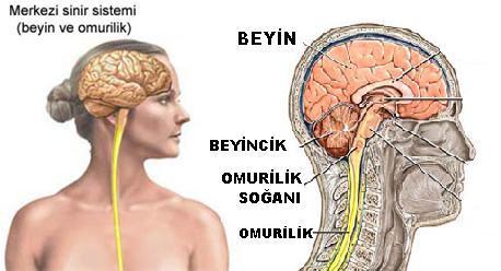 http://okul.selyam.net/pars_docs/refs/55/54407/54407_html_m4020e716.jpg